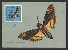 POLEN MK 1963 SCHMETTERLINGE BUTTERFLY MAXIMUMKARTE MAXIMUM CARD MC CM c9166