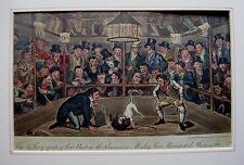 CARICATURES LIFE IN LONDON DOG FIGHTING WESTMINSTER PIT GEORGE CRUIKSHANK 1820