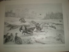 A March morning Blackcock's tournament by E Neale 1899 old print