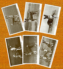 BASENJI  Named Set Of 6 Dog Photo Trade Cards