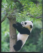 BAO BAO The Panda Bear Cub  #3