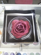 1 Premium Large Preserved Forever Burgundy Red Rose in Gift Box
