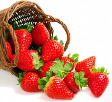 Everbearing Strawberry 10 Bare Root Plants - Fruit Spring, Summer & Fall