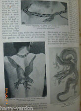 Tattoo's Tattooing Tattoo Artist Tools Rare Old Victorian Antique 1897 Article