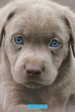 Keith Kimberlin Poster - BLUE EYES PUPPY  - New Adorable Puppy poster GN0848