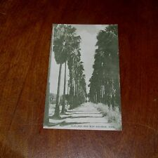 Antique Postcard of Palm Lined Road Near Harlingen, Texas