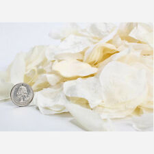 Ivory Silk Rose Petals - Bag of 200 petals PS