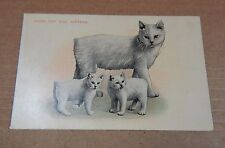 Postcard Animals Manx Cat And Kittens Valentine & Co posted 1924 xc4