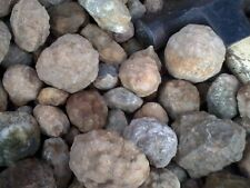 Geodes, Whole, Unopened - Sample Box - (25) small Kentucky Geodes