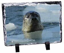 Sea Lion in Ice Water Photo Slate Christmas Gift Ornament, AF-S2SL