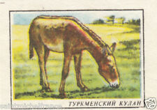 Hémione Onagre Âne sauvage Asie Onager Asiatic wild ass MATCHBOX LABEL 60s