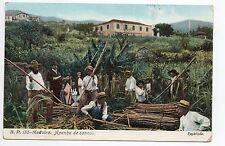 PORTUGAL MADEIRE Madeira Apanha de cannas beau plan
