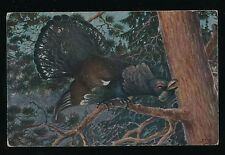 Birds WESTERN CAPERCAILLIE artist drawn c1910/30s? PPC