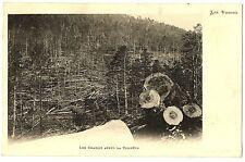 CPA 88 Vosges Les Chablis après la Tempête