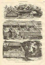 Pheasant Breeding Farm, Birds, Vintage 1872 French Antique Art Print,