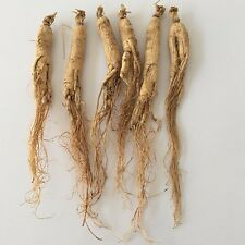 Bulk 15G Dry Wild Panax Ginseng Root 6 Years, Intensify function