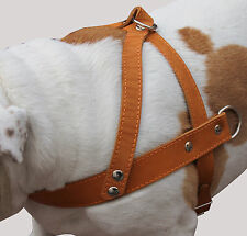 "Genuine Leather Pulling Dog Harness 1.5"" wide 31""-35"" size Doberman Pitt Bull"