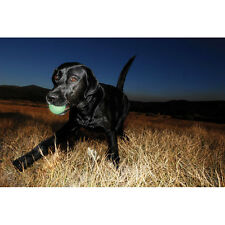 Chuckit Max Glow Ball 1 per Pack, Medium 6.5cm, Glow Dog Toy