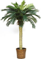 Sago Palm Silk Tree 4ft