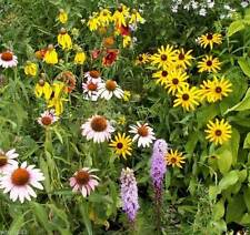 Perennial Wild Flower Seed Mix ( 1 oz Seed) Covers approximately225 square feet