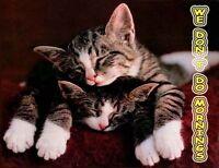 Tabby Kittens Fridge Magnet, Don't Do Mornings!