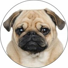 CUTE PUG CAR TAX DISC HOLDER
