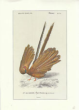 Objet de collection planche d'histoire naturelle atlas d'Orbigny 1973