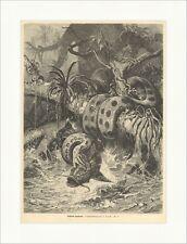 Fischende Anakonda Specht Tiere Schlange Dschungel Jagen Holzstich E 15017