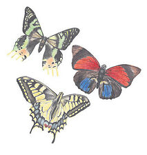 Butterfly 25 Butterflies Wallies 3 Designs Colorful Natural Wall Stickers Decals