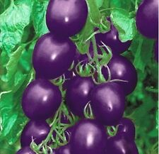 FD609 Purple Tomato Seed Pack Vegetable New For Home Garden ~1 Bag 20 seeds ~♫