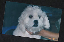 Old Vintage Photograph Cute Little White Puppy Dog Up Close 2004