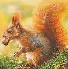 4 Servietten - Red Squirrel - rotes Eichhörnchen