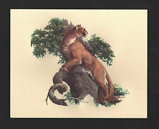 *Vintage* 1970s FRED SWENEY Wildlife 3-D EMBOSSED Print MOUNTAIN LION COUGAR NOS