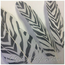 Pack of 3 Black/White Zebra print feathers 15-20cm craft/millinery/fly fishing