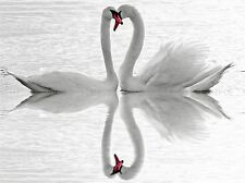 SWANS LOVE BLACK WHITE ROMANCE SWAN PHOTO ART PRINT POSTER PICTURE BMP912A