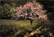 BR13196 Image du pintemps arbres tree  france