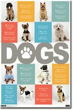 POSTER Dogs ABCs