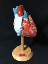 Denoyer Geppert Heart of America Anatomical Model w/ Stand