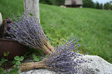 "Lavender Bunches - 2 Bunches - Dried Lavender Bunches (approx. 8-10"")"