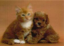 3 -D - Ansichtskarte: Cavapoo - Welpe und Kätzchen - Hund und Katze