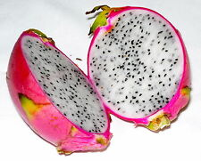 10 Graines  Hylocereus Undatus Pitaya DRAGON FRUIT White Flesh seeds