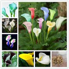 2pcs Mixed Colour Calla Lily Lilies Perennial Gardening Summer Bulbs Flower Corm