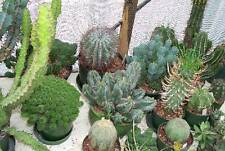 Euphorbia Seeds - Super Succulent Selection
