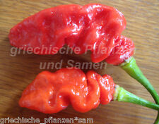 NAGA VIPER Chili 10 Graines le plus fort chili Le monde avec Piment Bhut Jolokia