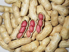 Tennessee Red Valencia Heirloom Peanut Seeds 5-8 Peanuts 4gm Open-Pollinated