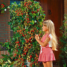 Red 100pcs/pack Strawberry Climbing Strawberry Fruit Plant Seeds Home Garden