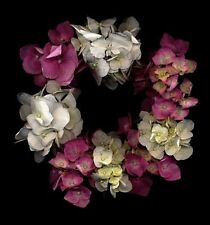ORTENSIA GHIRLANDA-FINE ART FIORI E PIANTE-FINE ART IMAGES FLOWERS AND PLANTS