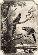 EAU FORTE / Fables de la Fontaine 1883 / LES DEUX PERROQUETS LE ROY ET SON FILS