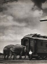 1940's Vintage 16x20 CIRCUS ELEPHANTS & TRAIN Animal Ringling Brothers Photo Art