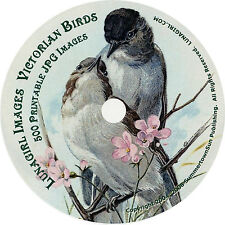 VICTORIAN BIRDS CD vintage images art postcards ephemera scrapbooking woodland